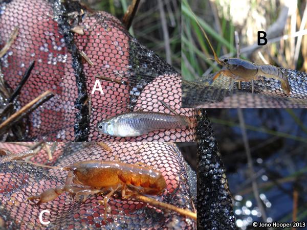 Aquatic invertebrates and fish