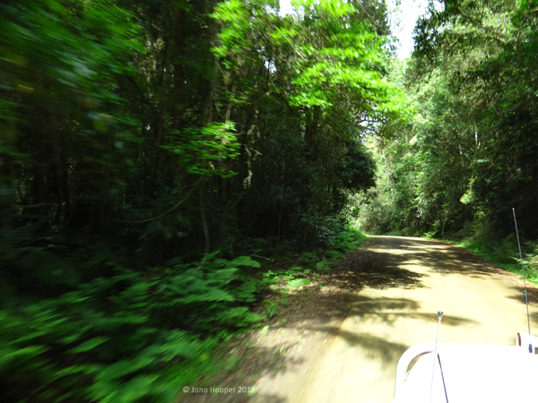 The lush green rainforest guiding our path as we drove by.