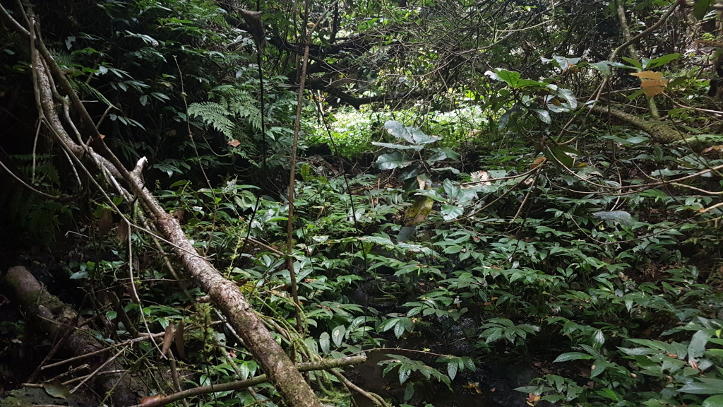 Habitat of the Richmond Mountain Frog